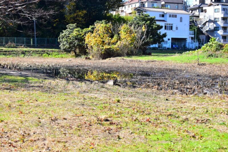 右岸調整池の沼