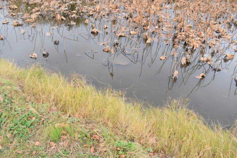 上谷調整池の景色