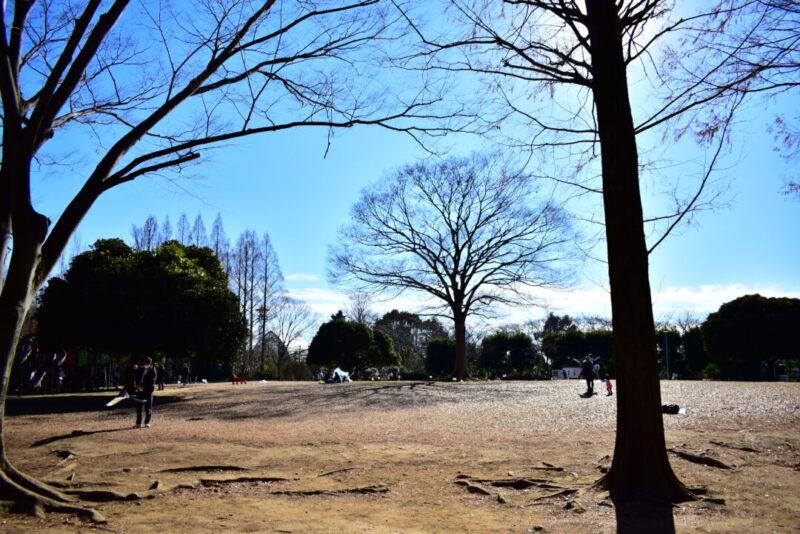 大崎公園の芝生広場