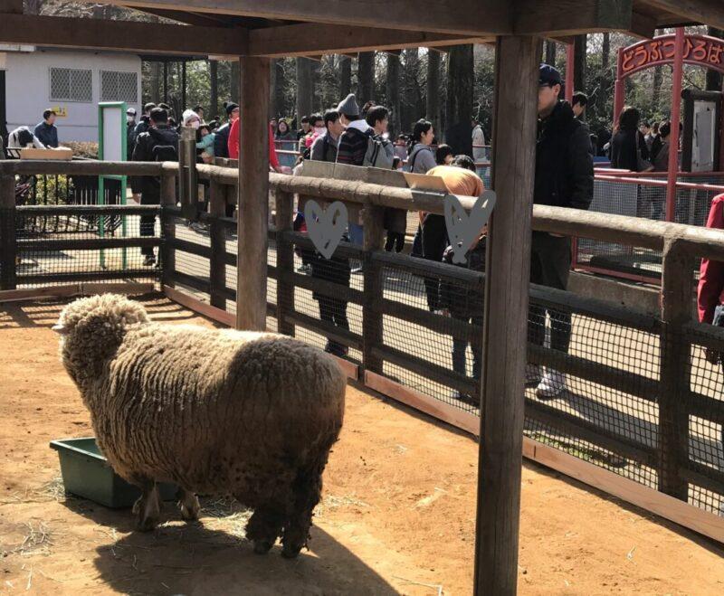 大崎公園の子ども動物園