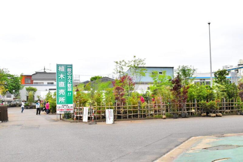 安行植物取引所 植木直売所