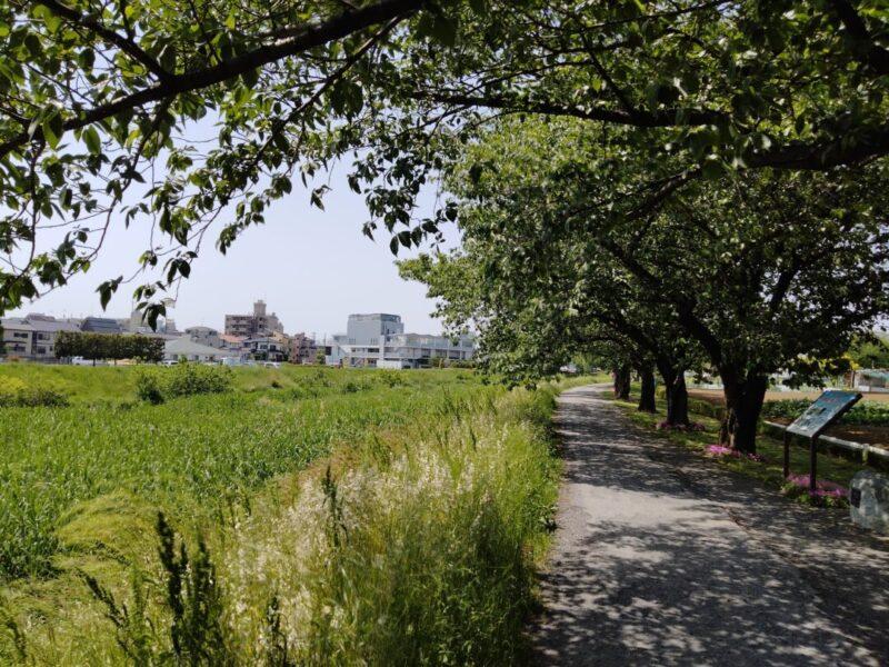 黒目川緑道