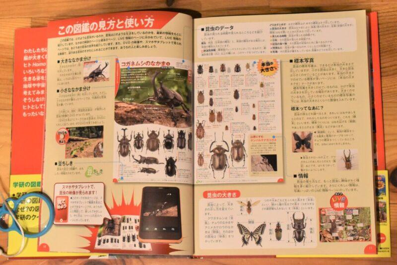 学研の昆虫図鑑