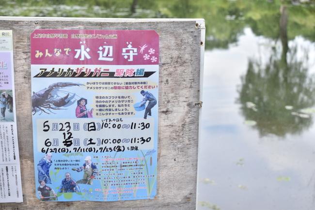 上尾丸山公園水生植物園