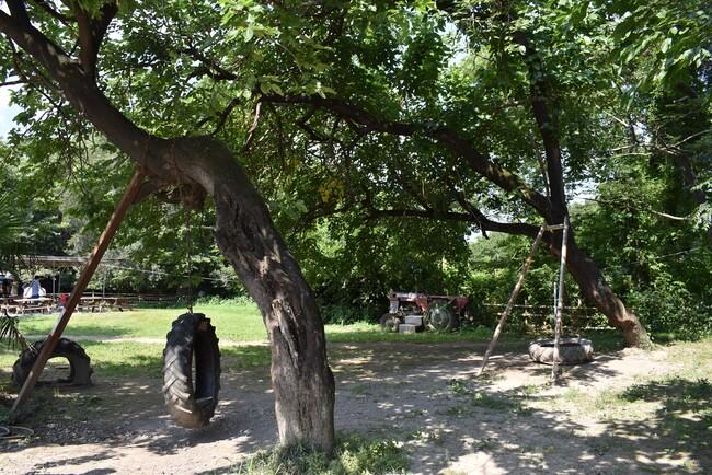 榎本牧場の遊び場所