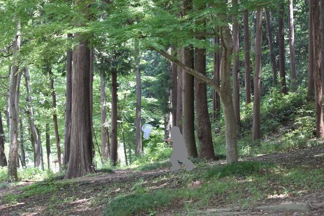 雑木林で虫捕り