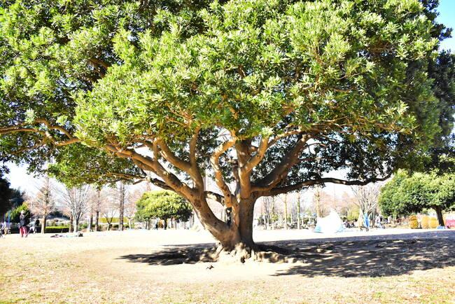大崎公園芝生広場