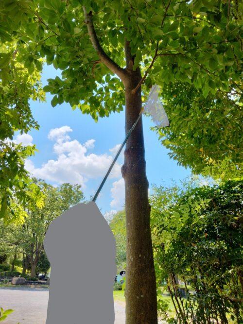 松芝公園で虫捕り