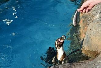 東武動物公園オータムナイトZOOのエサやり体験