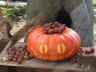 東武動物公園の動物たちにお化けカボチャをプレゼント